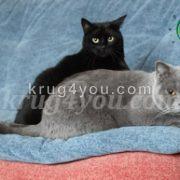 Черный и серый коты на подушке