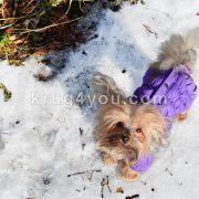 Собачка на снегу
